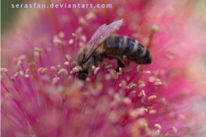 bee at work by serasfan