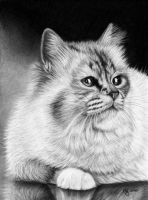 Kitten drawing by titol87