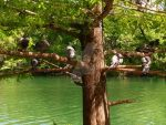 Perching Pigeons by BonnieBlue86