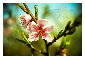 Summer flowers by Deimien