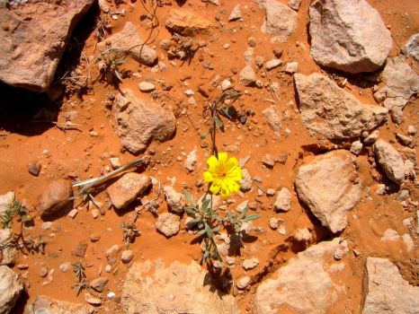 Flowers that Bloom in Adversity (5) by Syltorian
