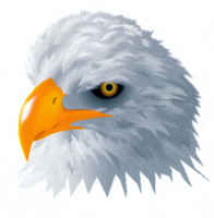 Bald Eagle Head by Ulta