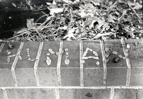 human written in leaves by cleveroctober