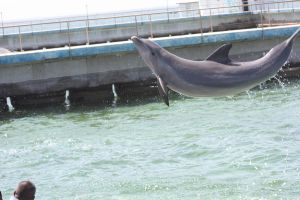 Flying dolphin? by AnnabellaTMIID