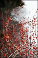 berries and branches by devilicious
