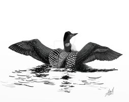 Loon Stretching Wings by steverino365