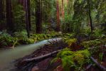 Muir Woods by close-up-clive