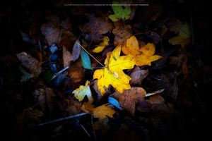 Wet Leaves by DREAMCA7CHER