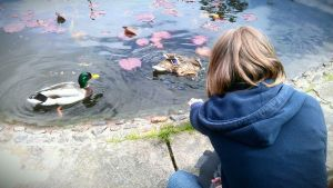 feeding the duckies by ashleighh9136
