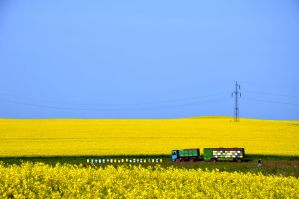 Yellow by cristilaceanu