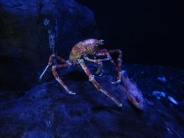 Crab 2 -- Sept 2009 by pricecw-stock