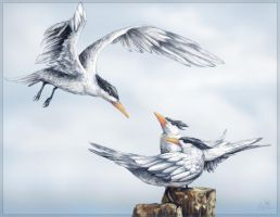 Royal Tern for Gulf Oil Spill by charfade