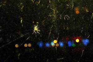Spider and the city by Margotka