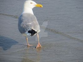Seagull 2 by Charlief43