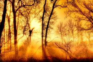 Burning Fog by VFrance