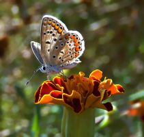 _flower and butterfly_ by lisans