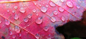 Water droplets by 0CrescentMoon0
