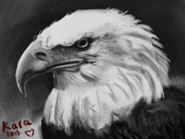 Eagle portrait by KarachiIdiot