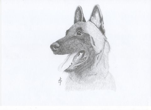 malinois graphite by fanny3001