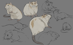 Friend concept sketches by DawnFrost