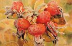 Rose Hips by AnneGoodall