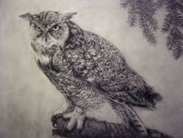Great horned owl by sleepDeprived
