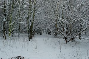 Into the Snowy Woods by Rodimus80