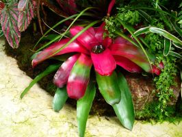 Red and Green Plant by wafreeSTOCK