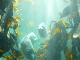 Kelp Forest 7 by Confussed-Stock