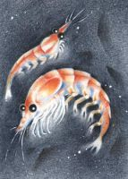 Krill ACEO -climate protection by kiriOkami