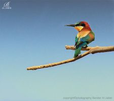 Bee Eater II by Bandar-Aljaber