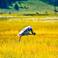 common crane by oxygen2608