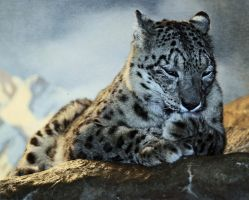 Snow Leopard by Thunderbolt-Designs
