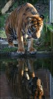 The mirror reflection by kataviech
