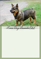 Rare-Dogs-Breed-Club by FamousShamus109