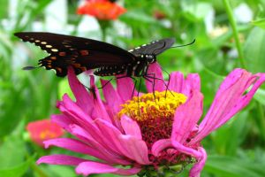 Butterfly on a flower by bnnnboy