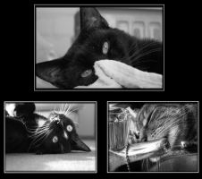 Cat Story by Hades-shadow