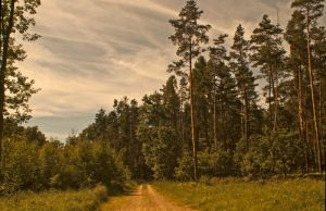 Forest Way in the Sring time by grindz0ne