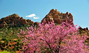 Spring in Sedona by fosspathei