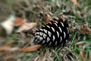 Christmas Pinecone by LDFranklin
