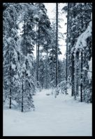 Winter Forest by xuvi