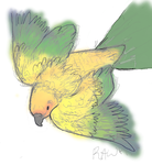 Rawr of the Conure by etesian