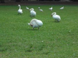 Flock of ... by Caedy