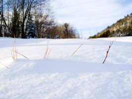 snow twigs by thatguyfromabove