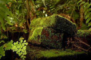 Mossy Bricks 8 by Armathor-Stock
