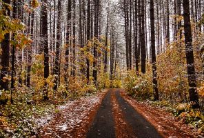 snowy autumnal woods by ariseandrejoice
