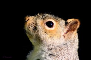 Profile of a Squirrel by Yoonett