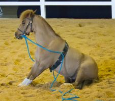 STOCK - 2014 Total Equine Expo-9 by fillyrox