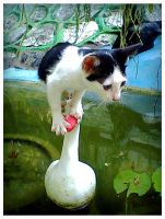 Acrobatic Cat by Mr-Ripley