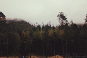 mountain forest by kittysyellowjacket